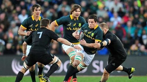 Springbok back row